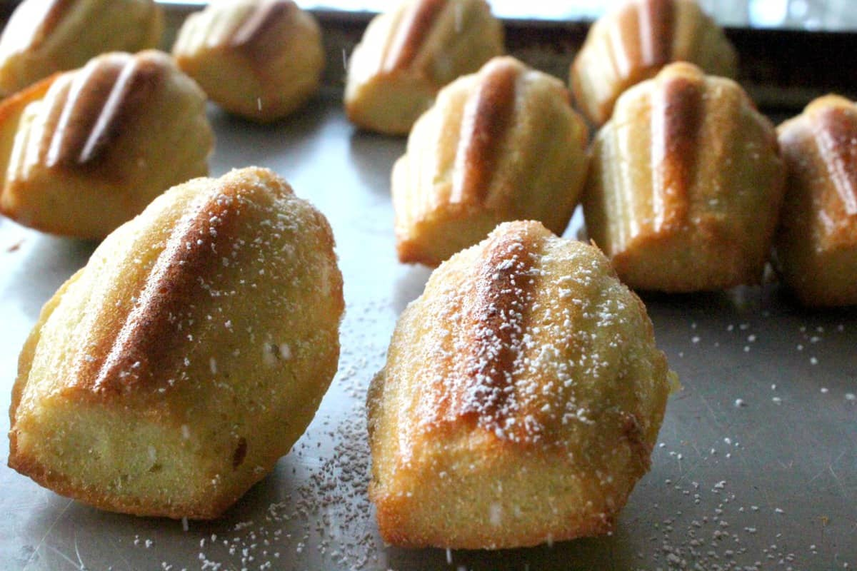 Side shot of classic madeleines dusted with sugar.