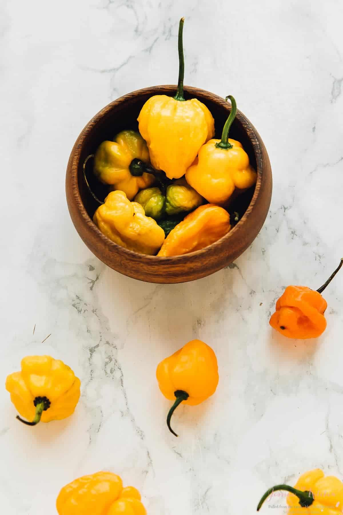 This Scotch Bonnet Pepper Hot Sauce is mind blowing! The flavours are phenomenal, it ismade with roasted garlic and carrots and goes perfectly with everything! via https://jessicainthekitchen.com